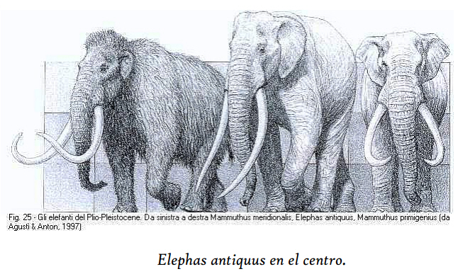 Elephas antiquus en el centro.