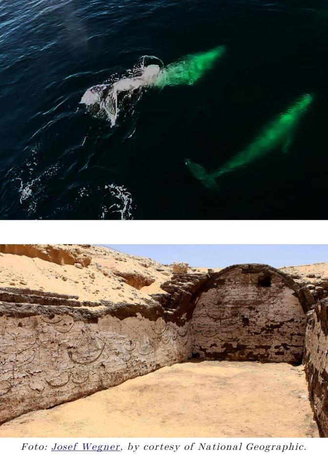 ¿Grandes olas y una ballena en la escena de la gran flota de barcos de Sesostris III?